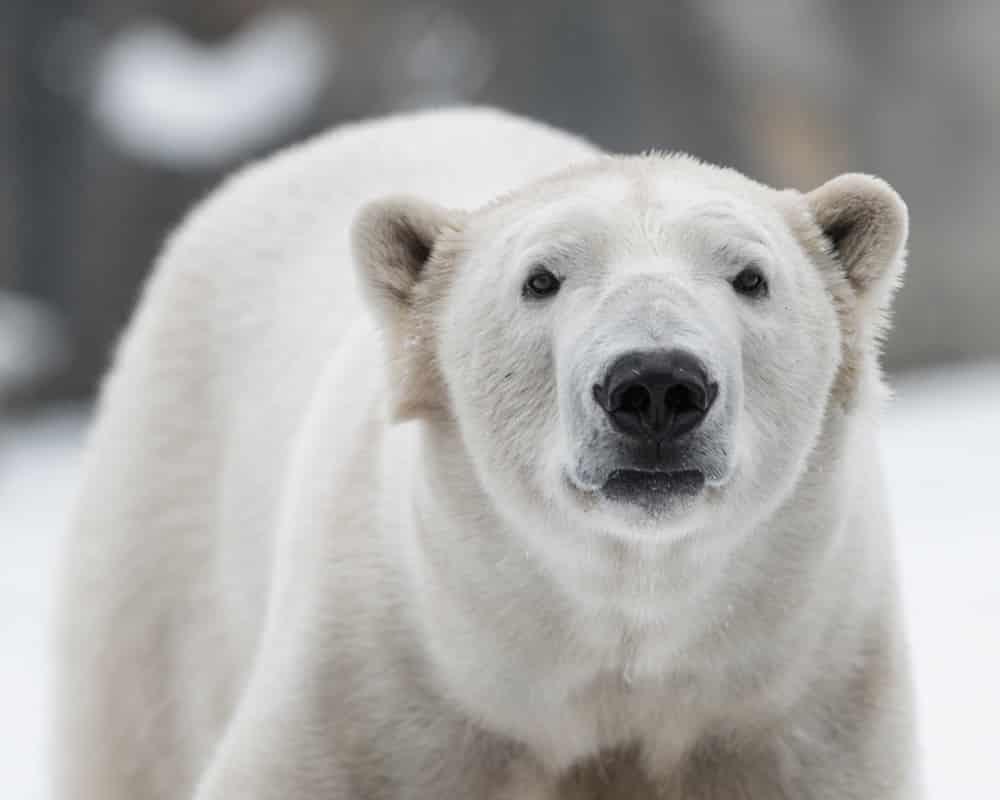 Báo cáo LHQ 1 triệu loài có nguy cơ tuyệt chủng