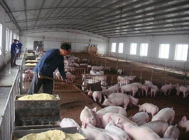 trang trại
