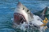 Người cha lao vào đánh cá mập để cứu con gái, câu được cá mập