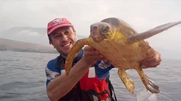 Hai người đàn ông tốt bụng giải cứu rùa biển mắc kẹt trong tấm lưới