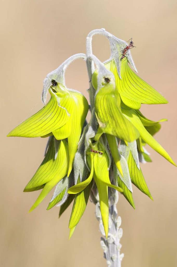 hoa chim xanh