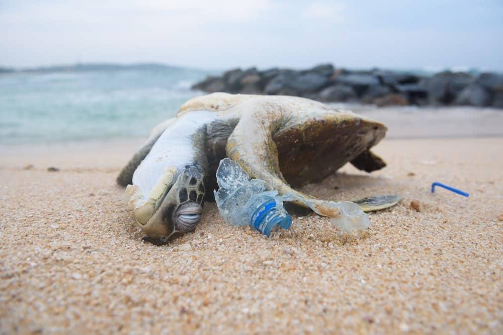 Báo cáo 2019: Đa dạng sinh học trên Trái đất có nguy cơ tuyệt diệt