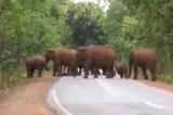 """""""Tang lễ voi"""": Xúc động cảnh tượng đàn voi tiễn đưa voi con qua đời"""