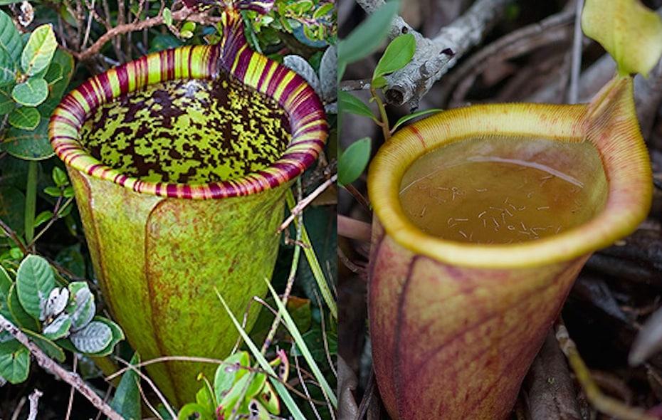 7 loài cây kỳ lạ nhất thế giới