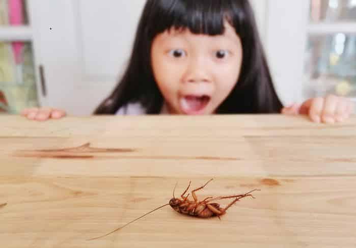 cách đuổi muỗi, cách diệt muỗi, cách diệt gián
