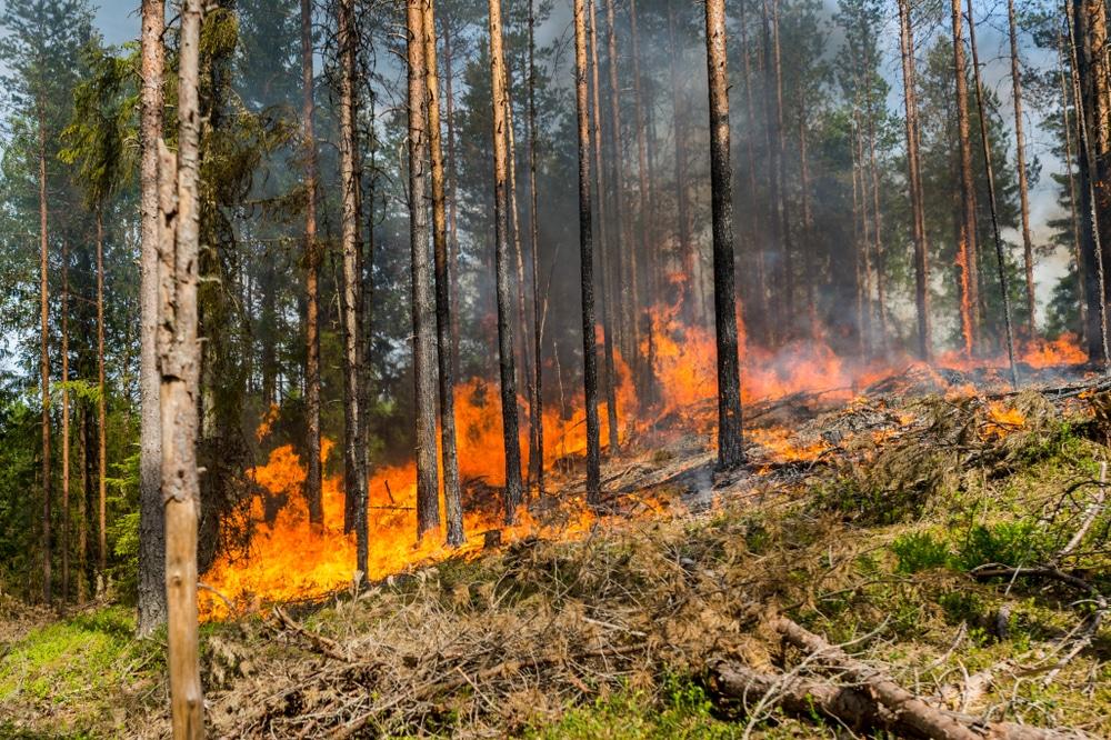 Cháy rừng Amazon đang trở thành vấn đề nóng toàn cầu.