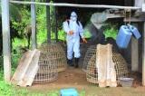 cúm A/H5N6 tại Bà Rịa - Vũng Tàu,