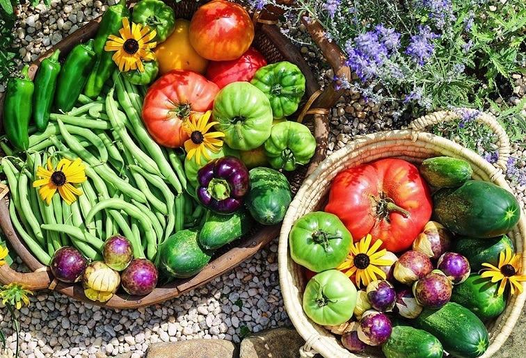 khu vườn, làm vườn, rau sạch