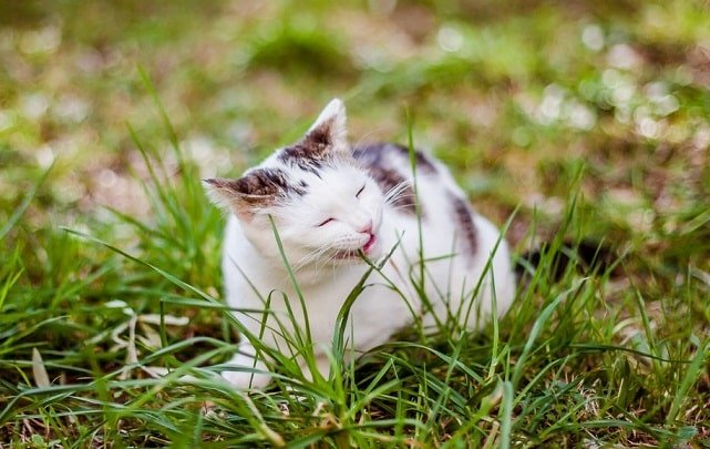 mèo ăn cỏ, mèo con