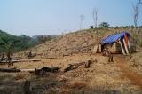 phá rừng, quỹ bảo vệ và phát triển rừng