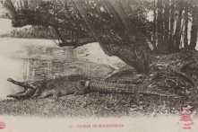 Chuyện cá sấu, rái cá cứu chúa tôi Nguyễn Ánh
