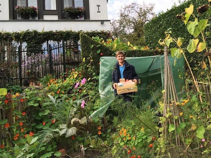 mảnh vườn đẹp như tranh, làm vườn, trồng rau