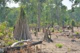 rừng phòng hộ, phá rừng