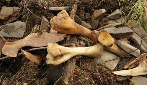 Nghĩa địa voi ma-mút 50.000 tuổi quý giá bị thợ săn ngà voi phá hoại
