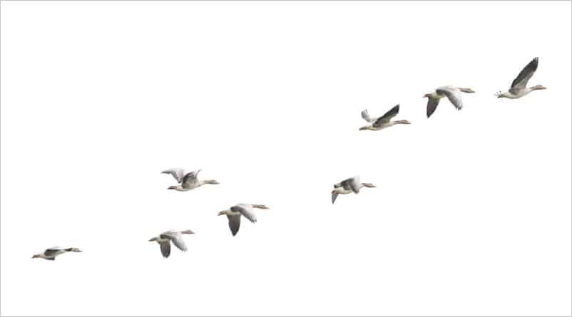 chim di cư, xuất khẩu lao động, vượt biên