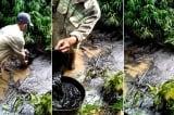 nước sạch có mùi lạ, dầu nhớt thải, nước sạch sông Đà