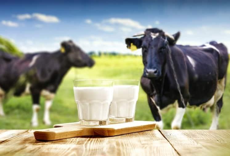 sữa bò tươi, sữa bò