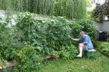 khu vườn nhỏ, làm vườn