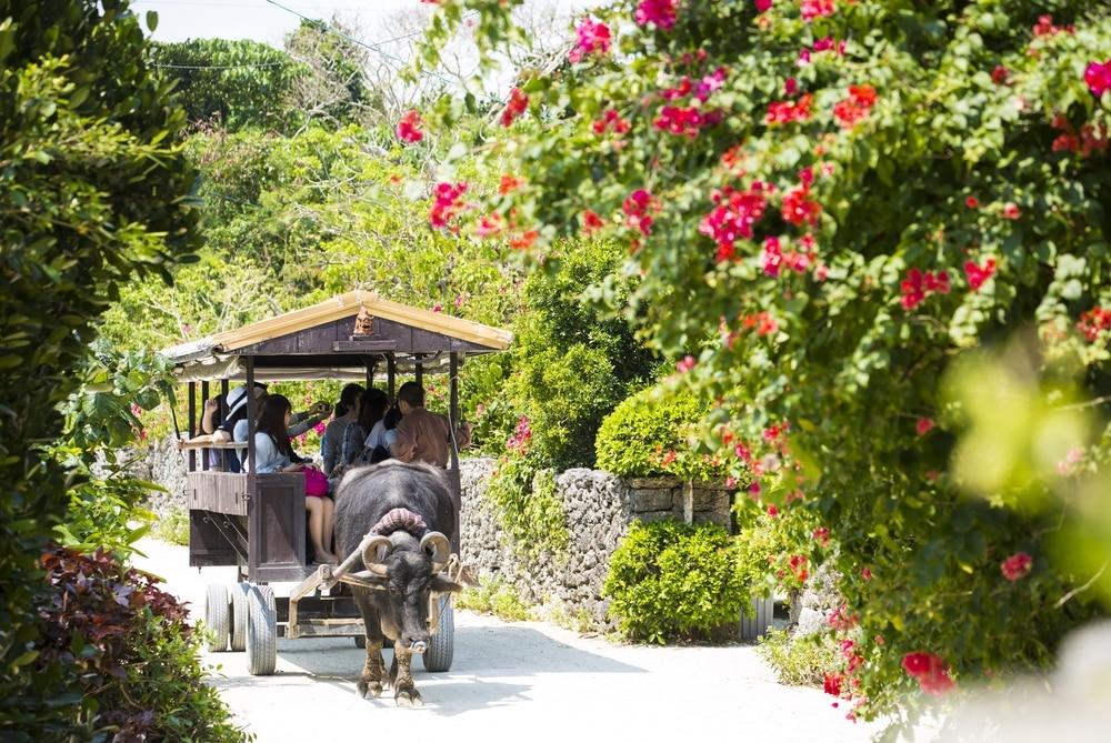 Okinawa – một hòn đảo ở Nhật thuộc khu vực sống thọ Blue Zone