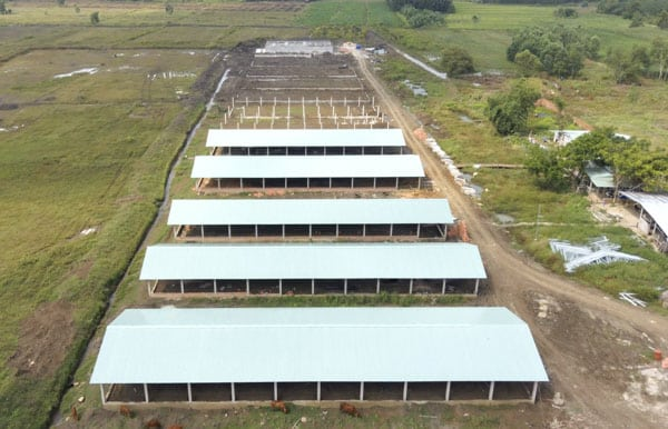 trại nuôi heo đầu nguồn nước
