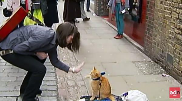 Người đàn ông vô gia cư và chú mèo vàng trên đường phố Luân Đôn