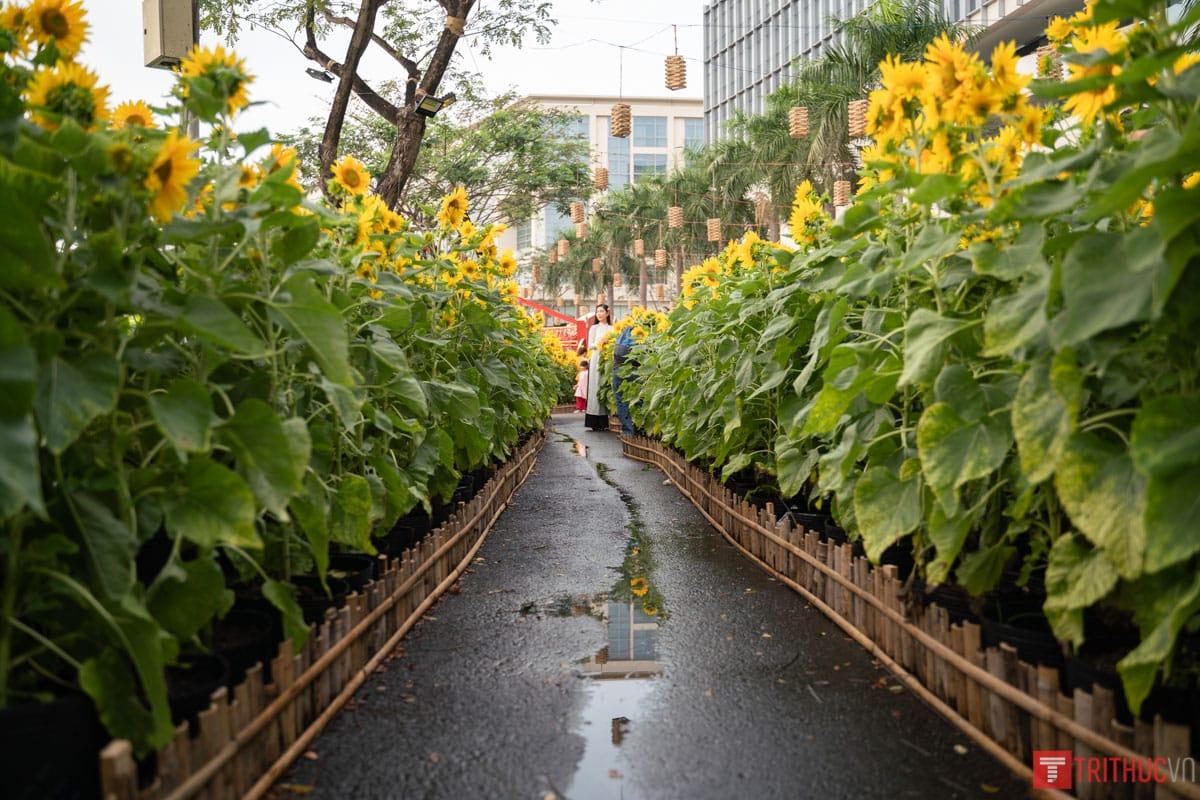 Ghé thăm đường hoa Phú Mỹ Hưng Q7: Rước lộc đồng hoa