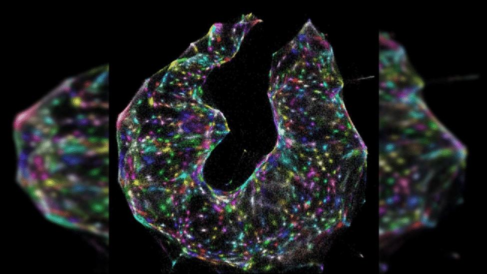 Những bức ảnh khoa học ấn tượng nhất năm 2019