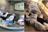 Báo cáo: ĐCSTQ phát tán tin giả khi viêm phổi Vũ Hán bùng phát