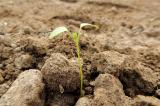 Hạt giống nảy mầm