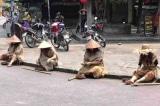 Nhóm 'ăn xin' tại phố cổ Hội An là người nhà của Vũ 'nhôm'