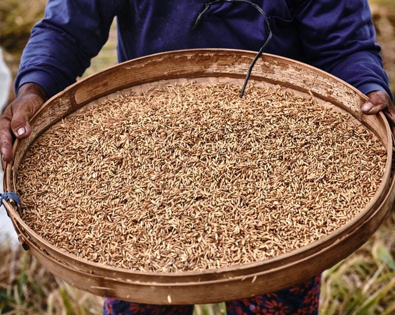 covid-19, xuất khẩu gạo