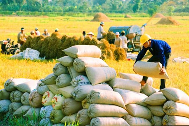 Bộ NN-PTNT, xuất khẩu gạo