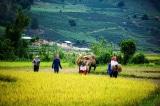 xuất khẩu gạo, Bộ Tài chính