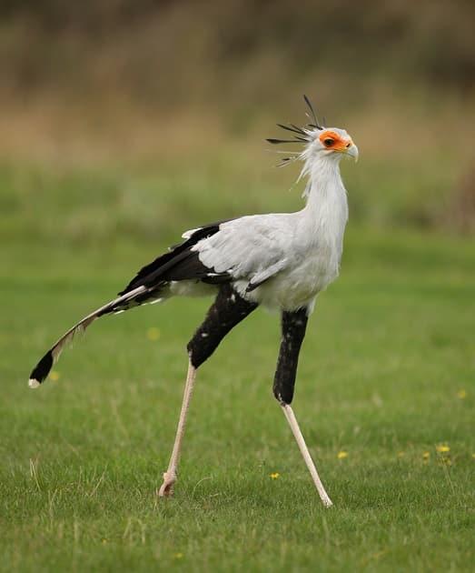 loài chim tuyệt đẹp