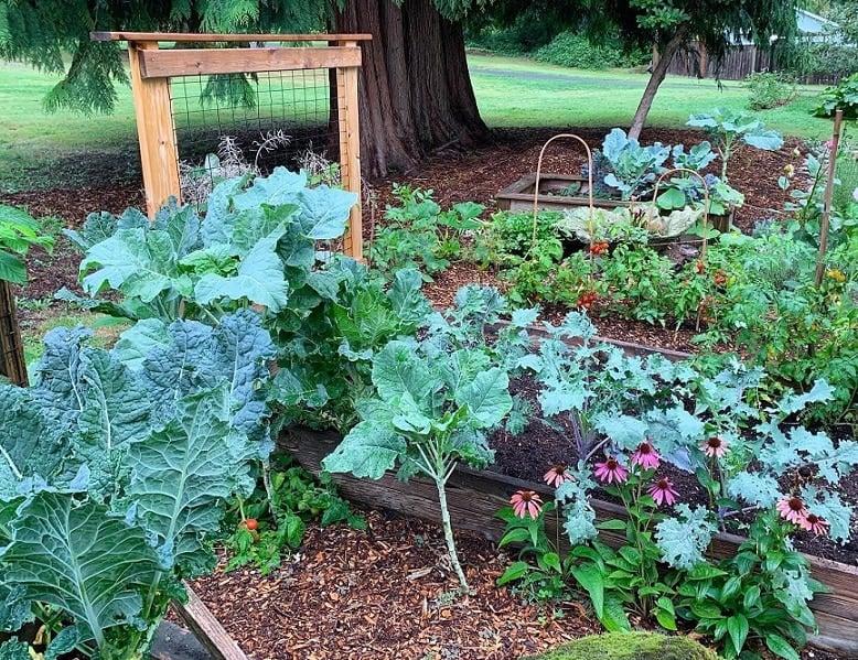 làm vườn, trồng rau sạch