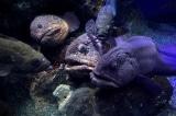 6 sinh vật kỳ quái dưới đáy đại dương có thể khiến bạn gặp ác mộng
