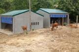 Nghệ An, xây biệt thự bò ở Nghệ An