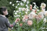 """""""Phương pháp trị liệu làm vườn mang lại hiệu quả thật kỳ diệu"""""""