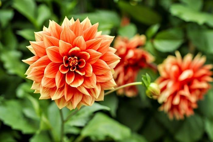 sự hoàn hảo, bông hoa hoàn hảo