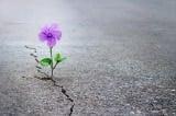 5 cách đơn giản để tìm thấy hy vọng trong thử thách