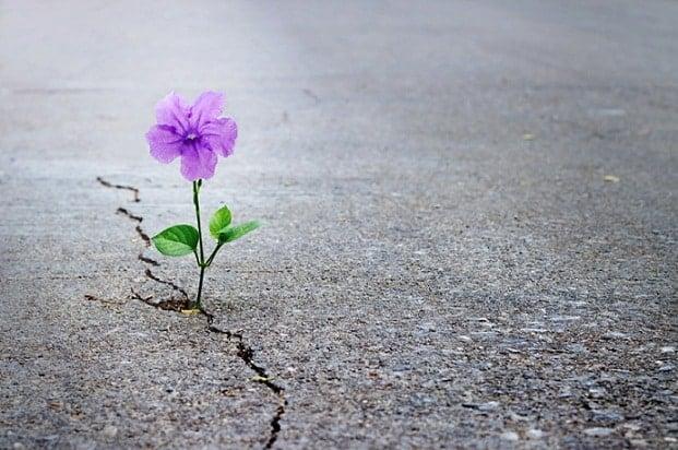 tìm thấy hy vọng, thử thách