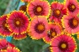 7 loài cây thu hút côn trùng đến thụ phấn