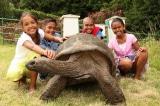 """Cuộc sống của """"cụ rùa"""" có tuổi thọ cao nhất thế giới"""