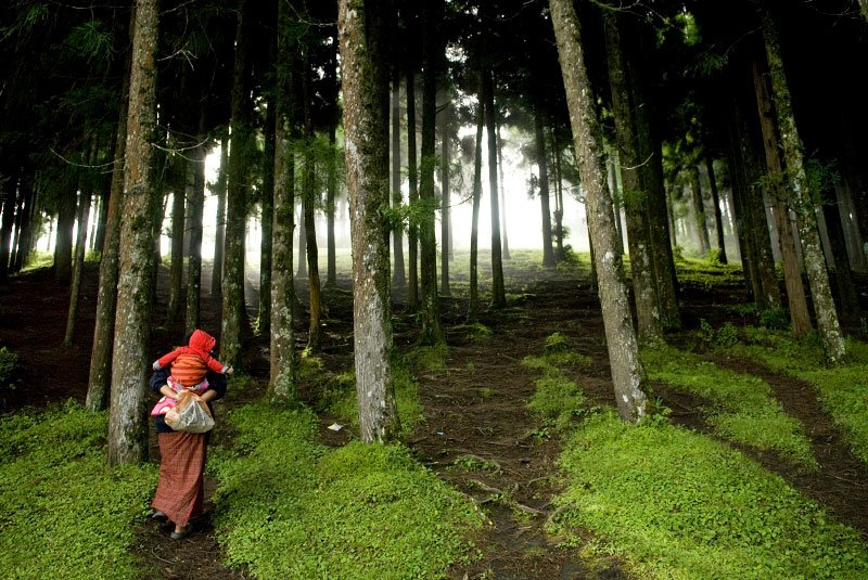 Image result for bhutan forest