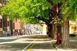 3 trong 1: Cây xanh – Đô Thị – Con người