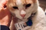 chú mèo làm nhân viên bảo vệ