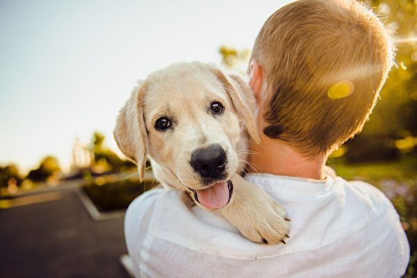 động vật dễ thương, động vật, con vật dễ thương