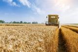 TQ chặn việc thiết lập cuộc điều tra của WTO đối với thuế áp lên lúa mạch Úc