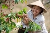 Nikkei: Việt Nam hiện là nhà cung cấp cà phê hàng đầu của Nhật Bản