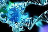 Ở cấp độ gen: Khí công giúp tăng khả năng miễn dịch và trao đổi chất